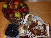 Plody našich lesů (do lesa je to cca 10 metrů) - Vlkov