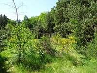 Pohled na Koniklec od Lochnesky - Vlkov