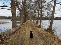 hráz rybníků Skutek a Dobrá vůle - chalupa k pronajmutí Klec u Třeboně