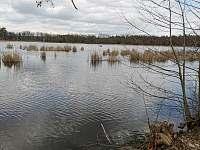rybník Dobrá vůle - Klec u Třeboně
