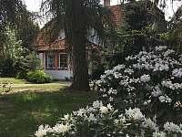 Zahrada a vzrostlé stromy,kde rostou hříbky :-)) - Třeboň