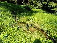 Potok u hájenky - Pohorská Ves