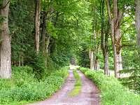 Příjezdová cesta - Pohorská Ves