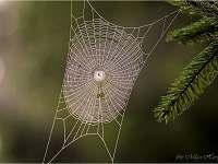 příroda - Hutě u Bechyně