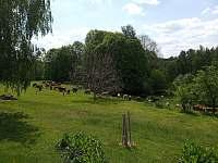Zahrada - Velké Skaliny