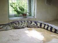 Tip na výet - krokodýlí ZOO Protivín - Nuzice u Bechyně