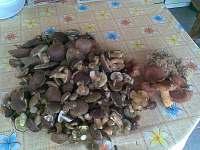 houbaření