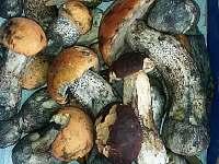 Okolí bohaté na houby