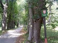 Chata Lipno - pronájem chaty - 25 Horní Planá