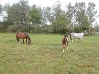 Koně - pronájem chalupy Hluboká u Borovan