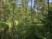 Třeboňsko - příroda - chalupa k pronajmutí Stráž nad Nežárkou