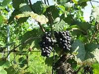 Naše vinice