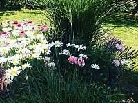 Zahrada - chata ubytování Němčičky