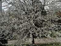 Jaro - pronájem chalupy Vanovice- Drvalovice