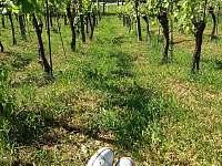Vinohrad před sklípkem - chata k pronajmutí Kostelec u Kyjova