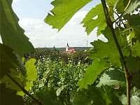 Pohled z našeho vinohradu na Šatovský kostel -