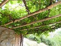 pergola z vinné révy - Těšetice u Znojma