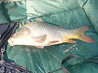 Rybaření - chata k pronajmutí Strání
