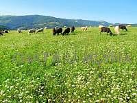 Pastviny - chata k pronájmu Starý Hrozenkov