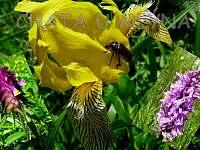 Unikátní orchidejové louky - chata k pronajmutí Starý Hrozenkov