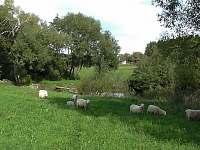 Blízko samoty je malý rybník - pronájem chalupy Valašské Klobouky
