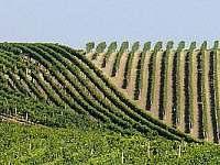 čejkovické vinice - apartmán k pronájmu