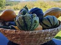 podzimní úroda - Haluzice