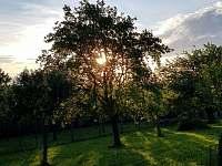 zahrada čaruje - Haluzice