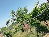 Ubytování u Jarušky na Moravě - chalupa - 32 Tvrdonice