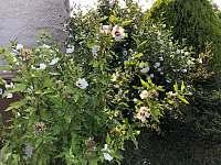 zahrada dvur - chalupa k pronajmutí Dolní Věstonice