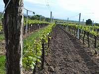 Vinný sklep U Kaňů - chata k pronájmu - 15 Nechory 280
