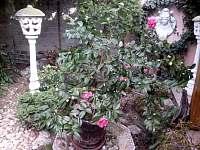 zahrada - Hlohovec