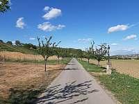 Cyklostezky vedou přímo kolem penzionu - Bořetice