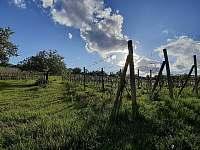 Vinohrad u penzionu - Bořetice