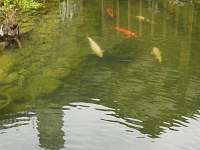 U zlaté rybky - pronájem chalupy - 18 Strážnice