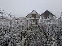 Vinohrad odpočívá - Velké Bílovice