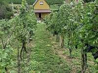 Pohled na objekt z vinohradu - chata k pronajmutí Mutěnice