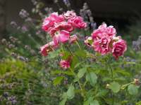 Rozkvetlá zahrada - chalupa k pronájmu Řicmanice