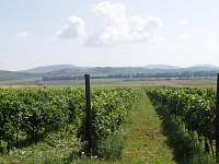 Vinice vinařství Kovacs