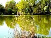 Krása mrtvých ramen Moravy - Veselí nad Moravou