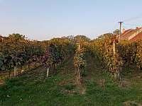 vinohrad podzim - chalupa k pronájmu Prušánky