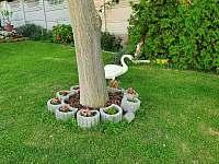 labutě/zahrada před domem u vody/ - Strachotín