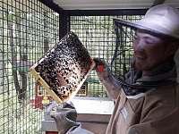 Na medu - MED přímo od včelaře