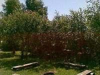 Suchý - penzion  - 7