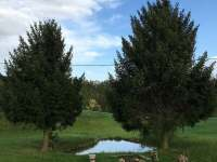 Samota u lesa Dvorsko - chalupa - 14 Kochov
