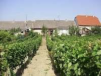 Chalupa ve vinařské oblasti Zaječí - ubytování Zaječí