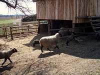 zahrada se salaší a ovečkama