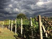 Vinný sklep - pronájem chalupy - 1 Prušánky-Nechory