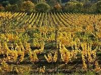 Vinohrady v Satove - Šatov