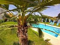 kvetoucí palma